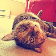 bild einer katze. sie liegt auf dem rücken.